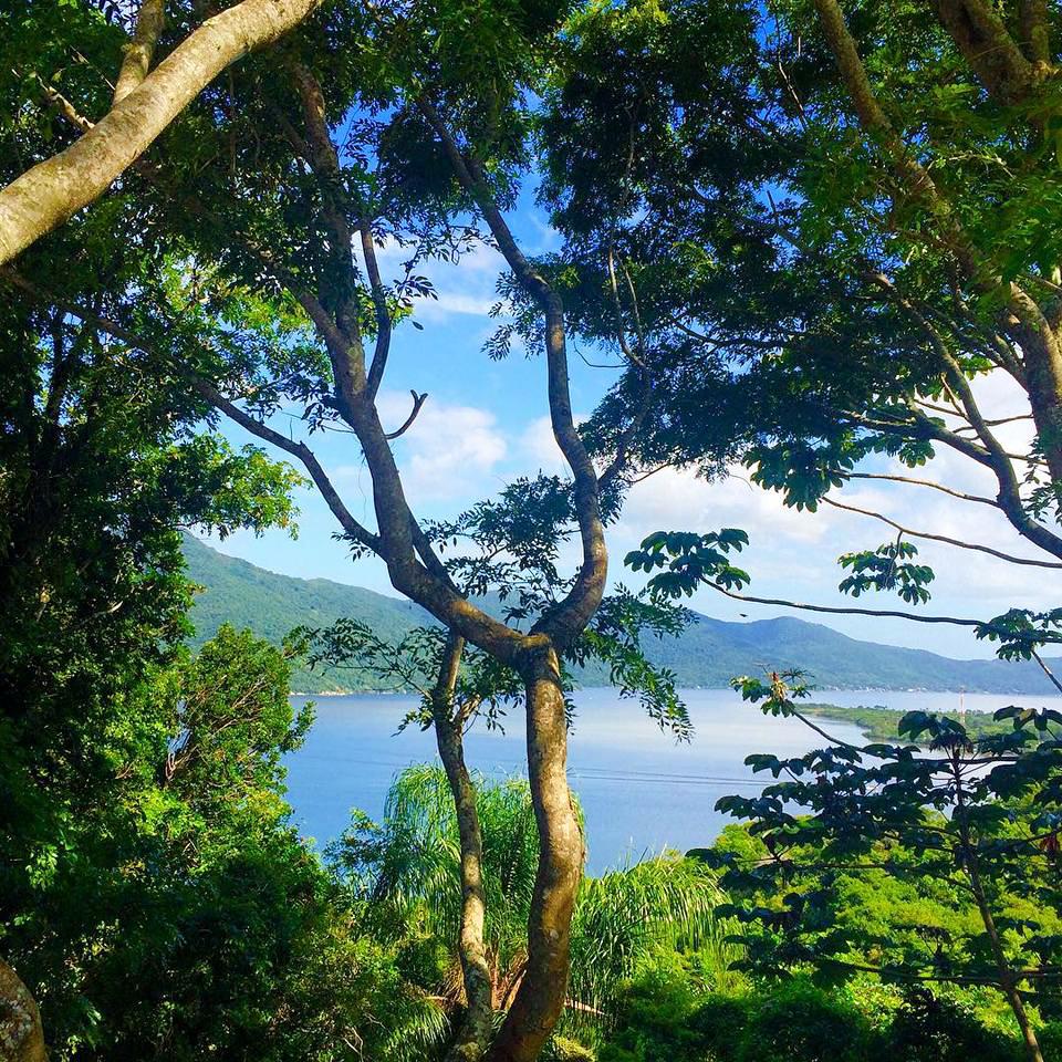 reflorestamento em região da Mata Atlântica próxima a praia
